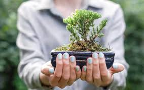 native british plants meet the man behind british bonsai u0027i let the trees tell me what