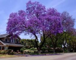 royal empress tree ebay