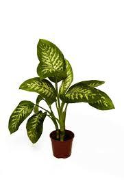 Best Low Light Plants 67 Best Office Plants Images On Pinterest Office Plants Office
