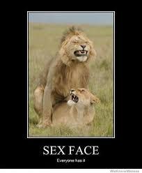 Sex Face Meme - sex face everyone has it weknowmemes