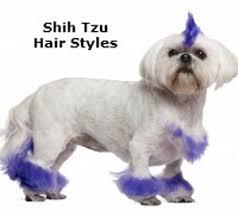shih tzu haircuts grooming shih tzu