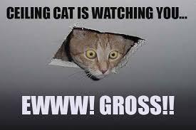 Ceiling Cat Meme - image 16652 ceiling cat know your meme