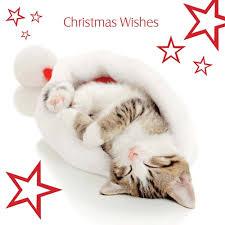animal christmas cards anchristmas net