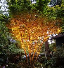 Outdoor Solar String Lights Patio Kootek 150 Led 72ft Solar Powered Led Fairy String Lights