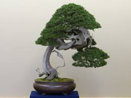 2013 kokufu ten submissions tyler sherrod bonsai