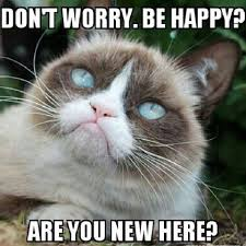No Meme Grumpy Cat - happy grumpy cat grumpy cat cat and humour