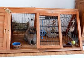 Indoor Hutch The World U0027s Most Recently Posted Photos Of Bunny And Condo