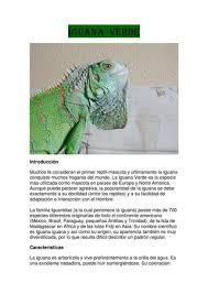 imágenes de iguanas verdes iguanas verdes by isaac vazquez dominguez issuu