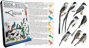 birds of bolivia field guide now available