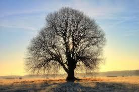 beautiful trees 8 by mt photografien on deviantart