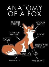 Swiper The Fox Meme - luxury 26 swiper the fox meme wallpaper site wallpaper site
