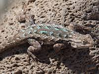 Backyard Reptiles Odfw Recreation Report Northwest Zone