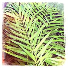 palm fronds for palm sunday imagine this happy lord s day palm sunday