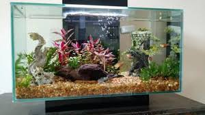 Live Plants In Community Aquariums by Properly Maintaining The Ph In A Freshwater Aquarium