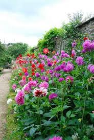 garden of ben pentreath bed of dahlias pretty in flora