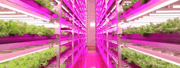 horticultural led grow lights hort americas