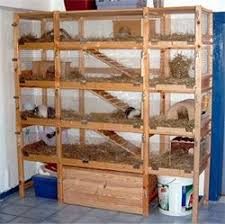 Rabbit Hutch Indoor Large 125 Best Cobaye Images On Pinterest Guinea Pigs Rabbit And Cavy
