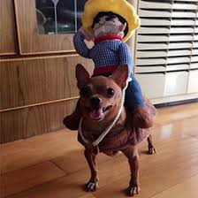 Cowboy Dog Costume Halloween Discount Funny Large Dog Costumes 2017 Funny Large Dog Costumes