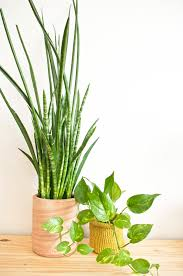 home edit easy to care for indoor plants sa style magazine