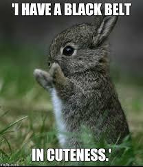 Cute Birthday Meme - cute bunny imgflip