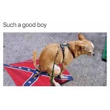Flag Meme - a well trained dog memebase funny memes