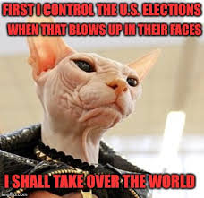 Hairless Cat Meme - it is a conspiracy but not human imgflip