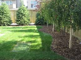Landscaping Ideas For Backyard Privacy Backyard Lime Trees Tilia For Above Fence Screening Home