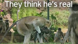 heartbroken monkeys grieve for stuffed robot camera after it u0027s
