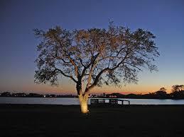 Hton Bay Landscape Lighting Columbia Sc Outdoor Lighting