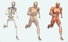 Human Anatomy Worksheet Human Heart Structure Worksheet Kids Human Anatomy Chart