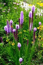 native plant database garden design garden design with the battery plant database dense
