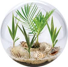 beach in a bowl palm tree growing glass terrarium kit