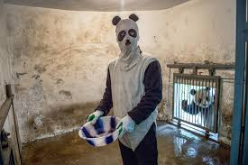 panda costume spirit halloween why scientists wear animal costumes u2014it u0027s not just for halloween