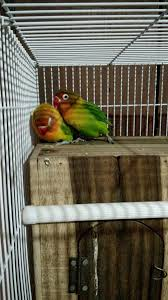 Cool Bird House Plans by How To Keep A Lovebird As A Pet With Pictures Wikihow