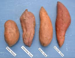 how to make yams for thanksgiving dinner how to use sweet potatoes for delicious u0026 healthy edibles