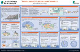 rodent models in neuroscience research is it a rat race