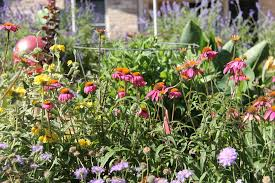 cottage garden flowers victory or death u2026in the garden for the native texas plants in