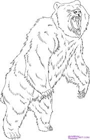 how to draw a grizzly bear step by step forest animals animals