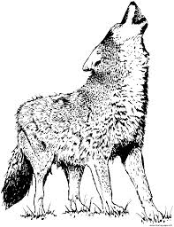 realistic wolf 2 coloring pages printable