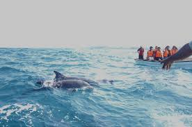 file dolphin tour in zanzibar jpg wikimedia commons