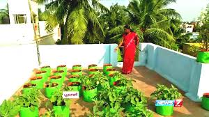 how to grow vegetables in a container or pots on the terrace poovali news tamil easy