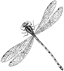 dragonfly graphics free download clip art free clip art on