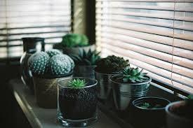 green thumb 18 best indoor plants for men hiconsumption