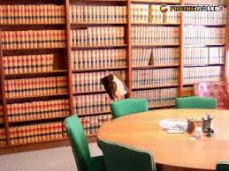 libreria giuridica torino libreria giuridica torino torino