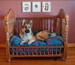 Cute Puppy Beds Best 25 Large Dog Beds Ideas On Pinterest Large Pet Beds Large