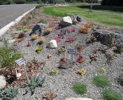 Desert Rock Garden Ideas Desert Rock Garden Ideas Home Design Ideas And Pictures