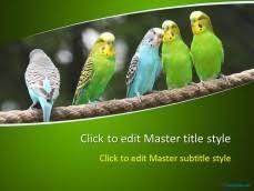 free animal ppt templates u0026 wildlife powerpoint slide designs