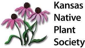 native kansas plants files kansas native plant society