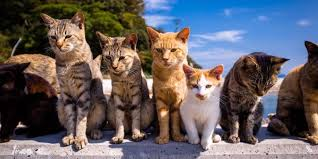 cat island cat island in japan aoshima japan known as cat island