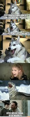 Pun Dog Meme - dyed inside d random funny interesting things pinterest